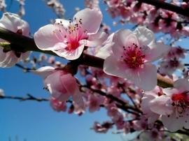 Chiusura invernale, arrivederci a Primavera!